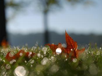 """まだまだ暑い日が続きますが、もうすぐ秋。 朝や夜、少し冷えるな...と感じる日も多くなってきますね。  そんな時に便利な""""羽織もの""""。 可愛くナチュラルにコーディネートしてみましょう♪"""