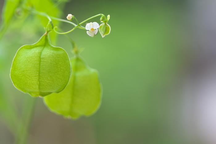 白い小さな花*