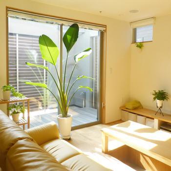 光の当たる窓辺に、インテリアの主役となる大きな観葉植物を飾って。植物の癒しパワーで、明るく元気に過ごせそうです!