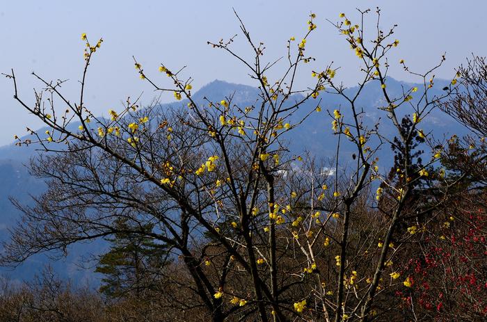 「宝登山」の山頂までは、「宝登山山頂駅」から徒歩で約15分程。画像は山頂からの眺め。連なるのは秩父山地。