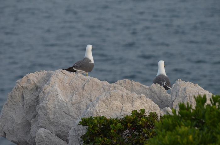 海岸に面しているので、海鳥たちもよく訪れます。広い空を悠々と飛ぶ姿や、岩場で休憩をしている微笑ましい姿に出会えます。