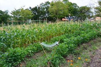「ここで有機野菜を作り、オーガニックの輪を広げ、やがては滋賀県中に広めていきたい。」そんな社長の思いが託された「北之庄菜園」では、たねやの従業員が自ら農作業に挑み、手塩にかけて様々な野菜を育てています。
