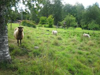 のどかな田園風景にぴったり?!な羊や牛もお出迎え。
