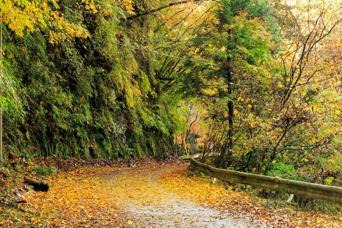 洞門を抜け、趣のある玄倉林道を進みます。