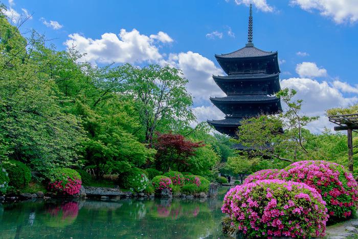講堂(重要文化財)には、大日如来を中心に21体の仏像を立体曼荼羅と言われる配列に安置している。大師在世時の住房である大師堂(御影堂・国宝)には、弘法大師像(国宝)と大師念持仏の不動明王坐像(国宝)が置かれている。豊臣秀頼の再建した金堂(国宝)、徳川家光が再建した 高さ約55mの日本最高の塔:五重塔(国宝)など見所も多い。