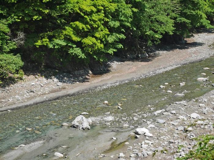 橋を渡り、いよいよ渓谷沿いの玄倉林道に。ユーシンブルーも素敵ですが、こちらの透明感のあるきれいな川の水も見ているだけで癒されそう。