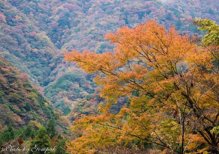 紅葉の時期の周囲の景色も色彩が美しく、一枚の絵画のよう。