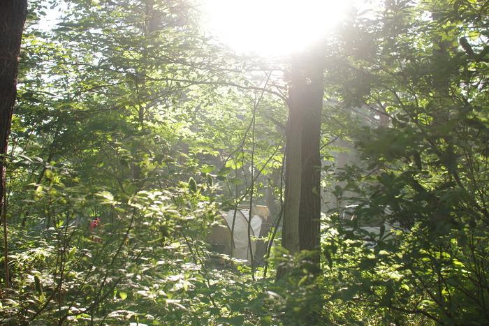 林間サイトは日差しが強くて多少暑く感じても涼しい風が木々からそよぐ