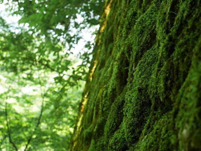 トンネルを抜けた先の壁の苔の緑が良い感じ。暑い日に訪れたら、壁にくっつきたくなるかも。