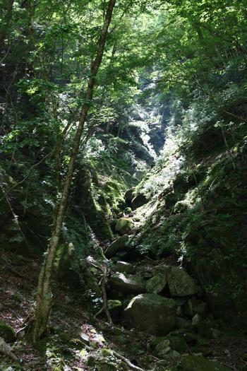 奥に進むにつれ、光、木々、岩、水などが織りなす神秘的な光景が展開されていきます。