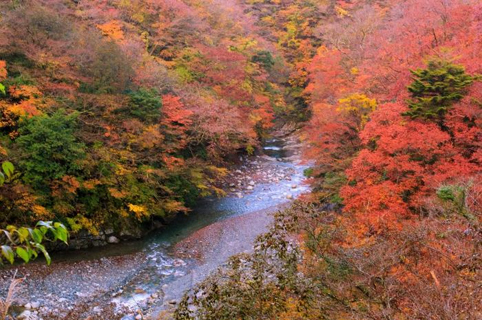 こちらは秋の光景。新緑の時期も紅葉の時期もどちらも魅力的で、何度も訪れたくなりそう。