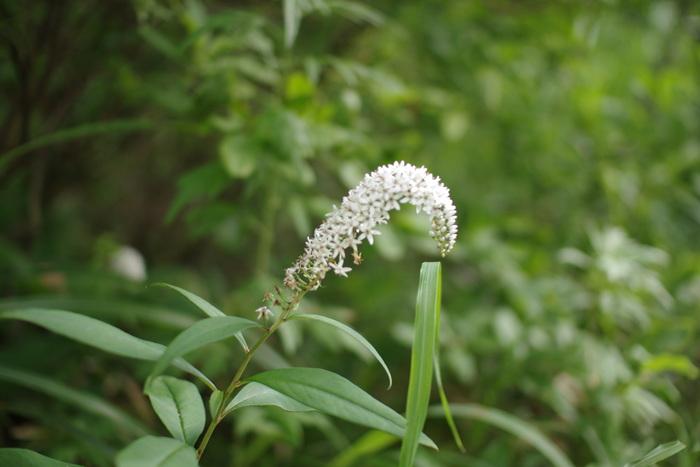 キャンプ場の中を散歩するだけでも見たことのない花など発見できて面白い