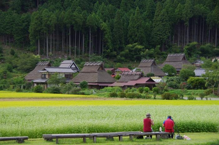 【9月初旬の蕎麦の花咲く「美山かやぶきの里」】