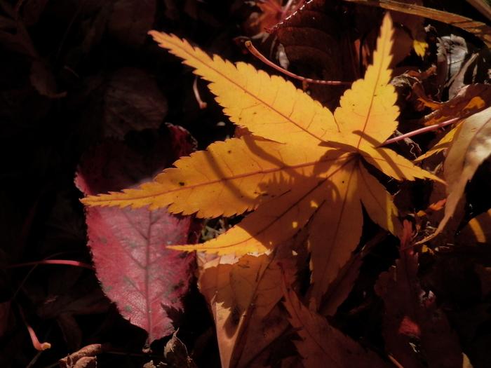 """落葉した葉から""""秋の色""""を拾うと、黄色から赤味を帯び、焦げ茶色までの色調。  以下では、黄色味を《イエロー系》、オレンジから明るい茶の色味を《アンバー系》、焦茶から黒茶の色味を《セピア系》と大別して、インテリアの例を紹介します。"""