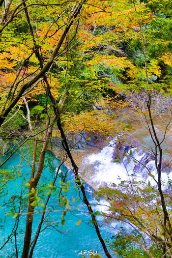 神奈川県足柄上郡山北町にある、美しすぎるブルーの川「ユーシン渓谷」。新緑と紅葉のスポットとしてここのところ、SNSなどで丹沢の秘境として紹介され、注目を集めています。
