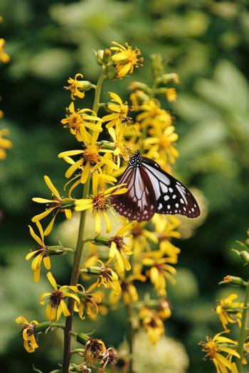 園内には植物だけでなく、蝶やトンボなどの昆虫も。街中では見られない、自然の光景が目の前で展開されます。