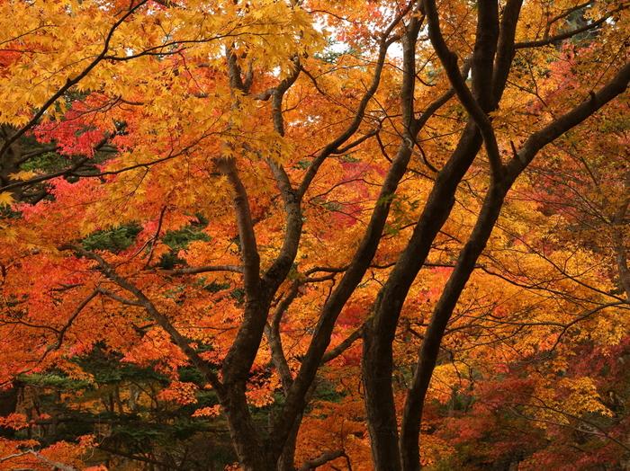 秋には美しい紅葉が見られます。花をつける植物もそれぞれ開花時期がことなりますから、季節ごとに違う見所があるのが魅力。