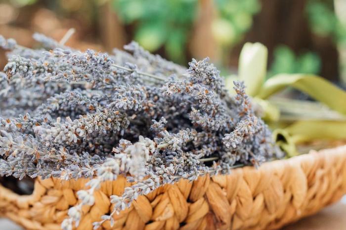 古代ローマの時代から使われてきたというラベンダーの香りは、気持ちをリラックスさせてくれます。チンキをそのままルームスプレーや入浴剤としても使うのもおすすめです。