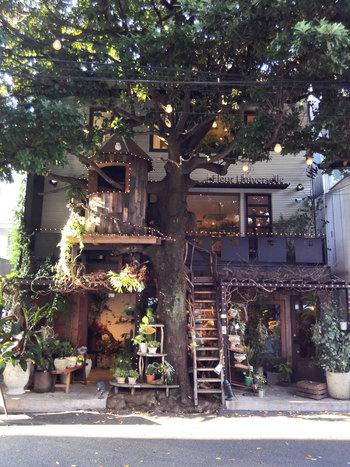 広尾駅からわずか徒歩1分の所に突如現れるこの大きな木。ツリーハウスにもなっていて、目を引く外観です。店名の「レ・グラン・ザルブル」とは、フランス語で「大きな木」という意味だそうです*