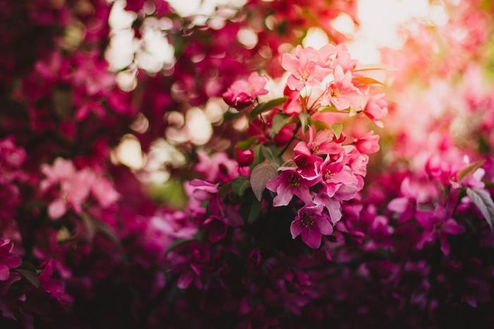 美しいお花と、美味しいお料理をどちらも楽しめるお店をご紹介しました*ぜひ足を運んでみてくださいね♪