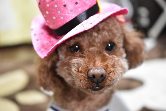 愛らしいおめめに可愛いピンクの帽子。人間は大人になるとこんなにキュートものは似合わなくなるけれど、ワンちゃんはずっとキュートなものが似合います♪