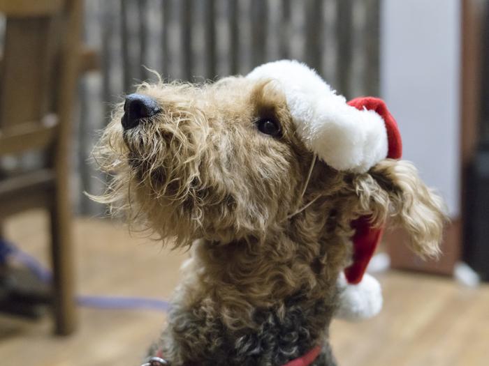 みんなでクリスマスパーティー!ワンちゃんもしっかり参加。「ケーキも用意してね」そんな声が聞こえてきそう。