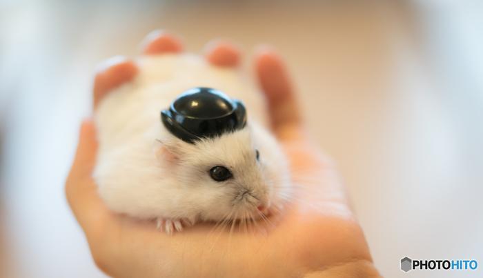 「私だって負けないわよ」とっても小さな帽子がお似合い♪これはレゴなどのおもちゃ用の帽子でしょうか?