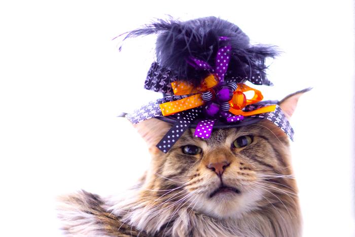 華やかな帽子がとってもよく似合う!おすまし顔がフォトジェニックです。
