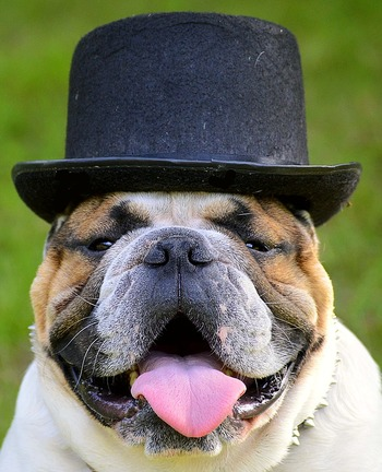 紳士的な帽子がとってもお似合い!タキシードも着せたくなっちゃいますね。