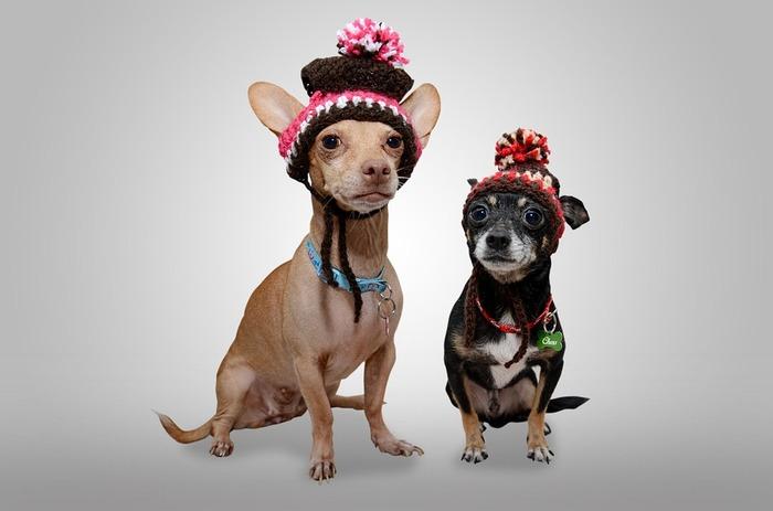 """真似したい!""""帽子でおめかし""""で、あなたのペットがもっとキュートに♪"""