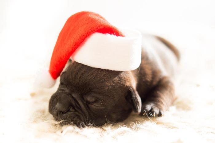 どんな夢を見てるんだろう?サンタ帽子はシーズンになるとたくさん出ているし、ちょこんとかぶせるだけで可愛くなるので、ワンちゃんにもネコちゃんにもおすすめです。