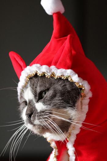 キュートなネコちゃんサンタクロース。寒い中プレゼントは配ってくれなさそうだけど、そこにいるだけで癒されますね。