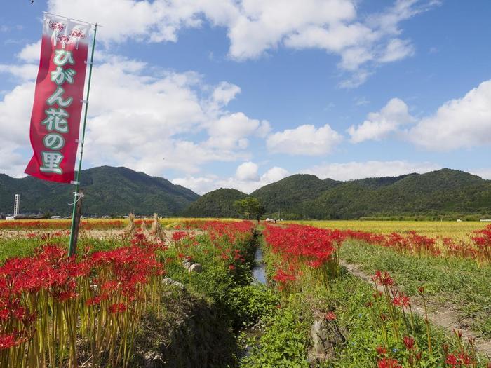 【9月中旬の亀岡市・「穴太寺」周辺の景色】