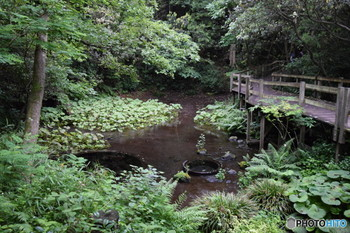 市内の各地には富士山から流れ出た天然水が湧き出し、国土交通省が制定する「水の郷百選」にも選ばれた、まさに「水の都」でもあるのです。