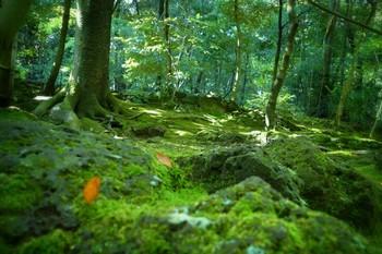 楽寿園は、三島駅の目の前にある森に囲まれた巨大な公園です。明治維新で活躍した小松宮彰仁親王の別邸として建てられた邸宅跡で、現在は市立公園として開放されています。