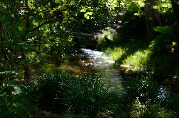 園内は広大な自然林と、富士山の雪解け水が湧き出す池があり、国の天然記念物・「伊豆半島ジオパーク」のジオサイトとして認定されています。木々と水の美しさを感じながら、ゆっくり散策してみてくださいね。