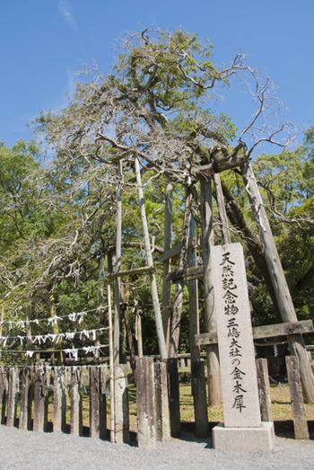 東京ドームがすっぽりおさまるくらいの広大な境内ですが、中でも必見なのが、樹齢1200年を超える巨大な金木犀。秋に花が咲くと、あの優しい香りが境内いっぱいに広がるそうです。自然と水のパワーをたっぷりいただいちゃいましょう♪