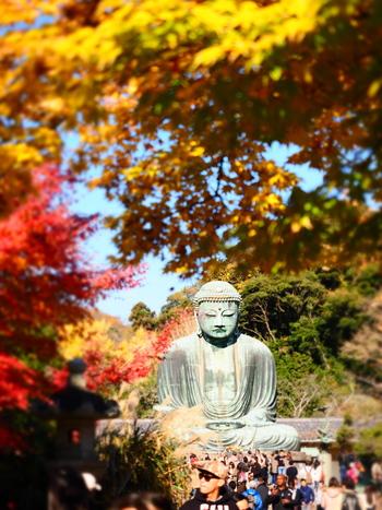 鎌倉の紅葉は、色づく時期は場所によって異なりますが、基本的には例年11月中旬から色づき始め、12月中旬頃まで楽しめます。その中でも最盛期とされるのは、11月下旬~12月上旬辺り。全国と比較すると遅めのスケジュールなんです。