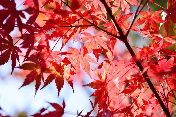 紅葉バーベキューを売りにしている有料施設もあるくらい、実は秋はバーベキューに最適な季節なんです。