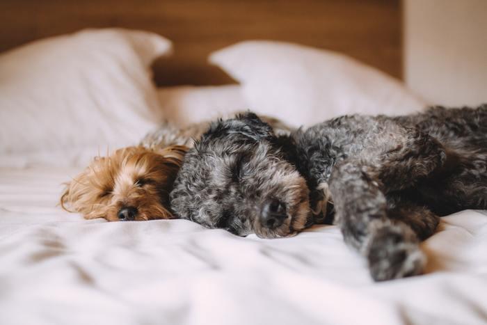 スケジュールや理想の1日のプランづくりが終わったら、睡眠時間を見直してみましょう。  「朝の習慣になぜ睡眠時間?」と感じる方も多いかと思いますが、朝の時間の過ごし方には睡眠が大きく関わっています。  アメリカのとある機関の調査によると、朝の時間をはじめ、1日を有意義に過ごすには7〜8時間の睡眠がベストという結果が出ているそう。  睡眠時間が長すぎると自信が低下しやすくなるなどの弊害も生じがちなため、なるべく最低でも7時間程度は睡眠を取り、ちょっと早起きして朝の時間を楽しんでみましょう♪