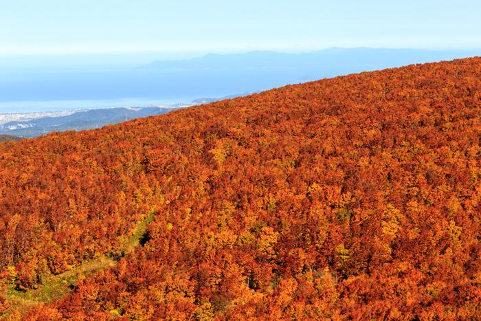 春の新緑から冬の銀世界まで、四季を通じて様々な美しい光景を見せてくれる八甲田山。特に紅葉の時季は、山一面に鮮やかな絨毯を敷き詰めたかのような、素晴らしい光景が広がります。