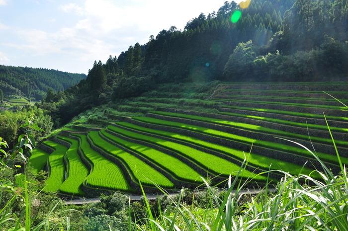 山間に佇む星野村は、急勾配の谷間を農地として利用した棚田が数多くあります。急斜面に折り重なるように棚田が広がる様は、日本の原風景でもあり、眺めているとどこか懐かしい気持ちになります。
