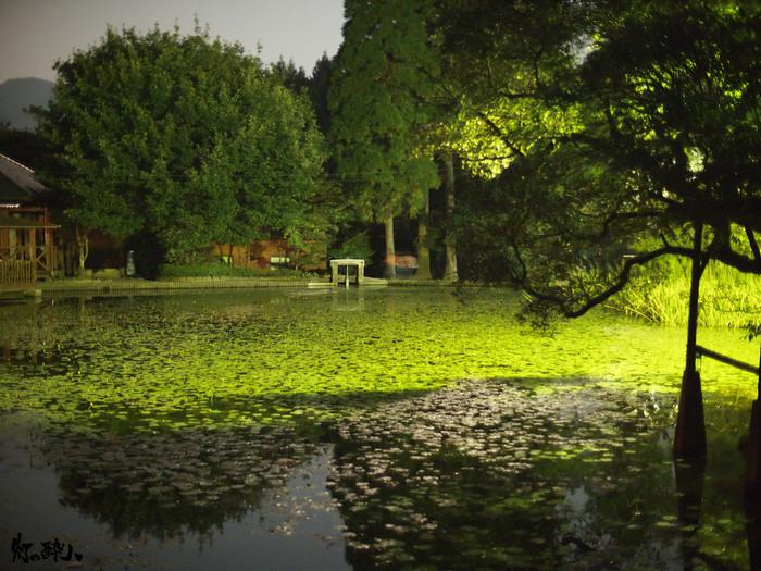 火山によって形成された麻生池は、池の山キャンプ場のすぐ近くにある池です。周囲700メートルの池では希少な植物がたくさん生息しています。