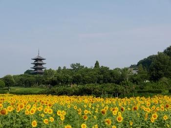 備前一宮駅から総社駅までは、サイクリングロード(吉備路自転車道)が整備されています。この道は「日本の道100選」の一つ。総距離約17kmです。ゆったり周るのなら自転車が最適。  駅にはレンタサイクル店があり、乗り捨ても可能。ぜひレンタルしてサイクリングしながら里山の風景を愉しみましょう。 【画像は、備中国分寺の五重塔。】