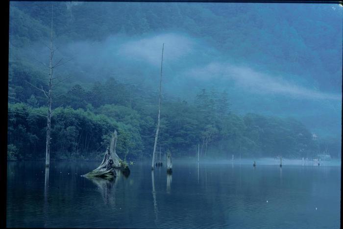 その際、水没した林が立ち枯れとなり、未だに神秘的な景観をもたらしています。