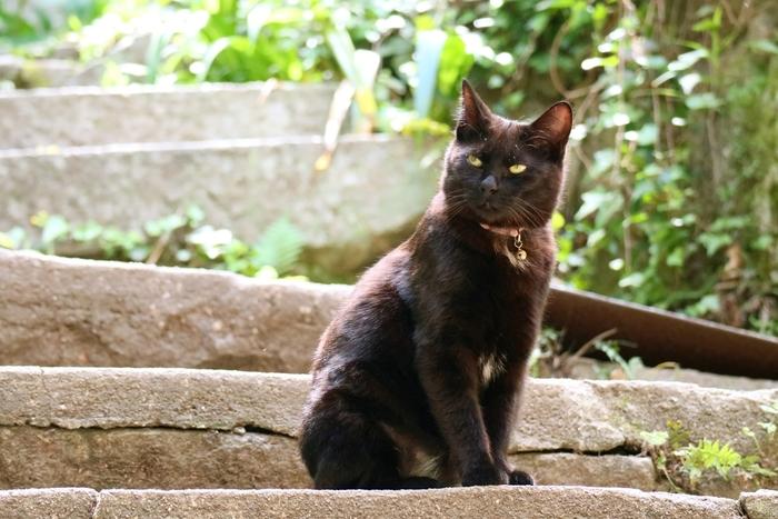 """尾道は、猫の町。いたる所で猫と出会います。特に""""猫の細道""""は、猫の通り道と重なるため遭遇率が高い場所です。猫好きさんは、ここを目指して。"""