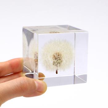 まるで呼吸をしているような、そこで生きている印象を与えてくれる、タンポポをガラスの中に閉じ込めた植物立体標本。窓辺にコロンと置いておけば、光を受けてきらきら輝きます。