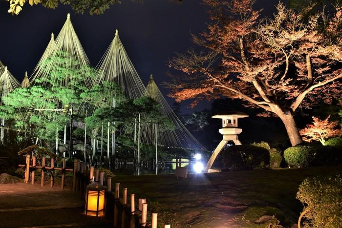 秋のライトアップは、例年「中秋の名月」の頃と、紅葉が楽しめる11月半ばから12月はじめの2回開催されます。桜と比べて、紅葉は比較的長く楽しめるので、旅行の計画も立てやすいですね。晩秋には、金沢の冬の風物詩「雪吊り」もお目見えします。