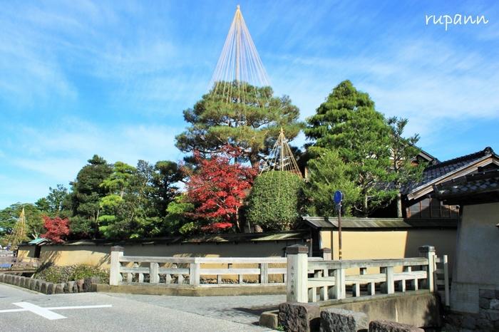 名庭として名高い「野村家」など、見どころもいっぱい。江戸情緒と紅葉のハーモニーが楽しめます。