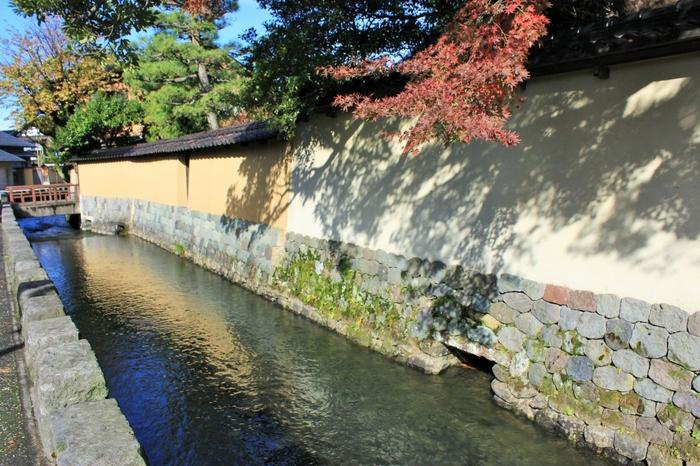 塀に映る紅葉の影も、どこか風情たっぷり。昔の人は過ぎ行く秋を、どんな気持ちで眺めていたのでしょうか。